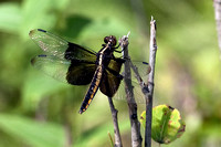 20090725-Dragonfly-7